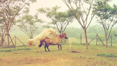 Two horses mating in vintage style color effect.