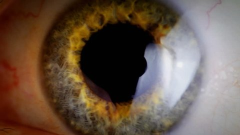 Extreme close up human eye iris