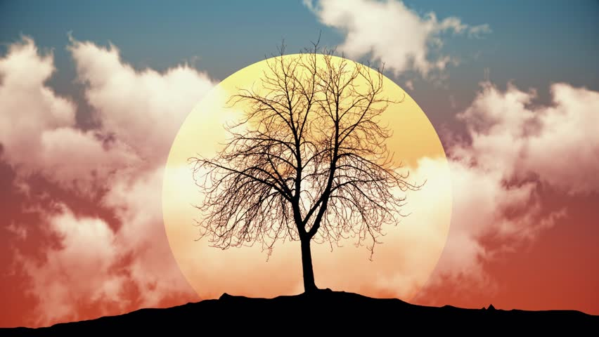 Sun Rising Behind Tree Silhouette - Night to Day Animation | Shutterstock HD Video #13856198