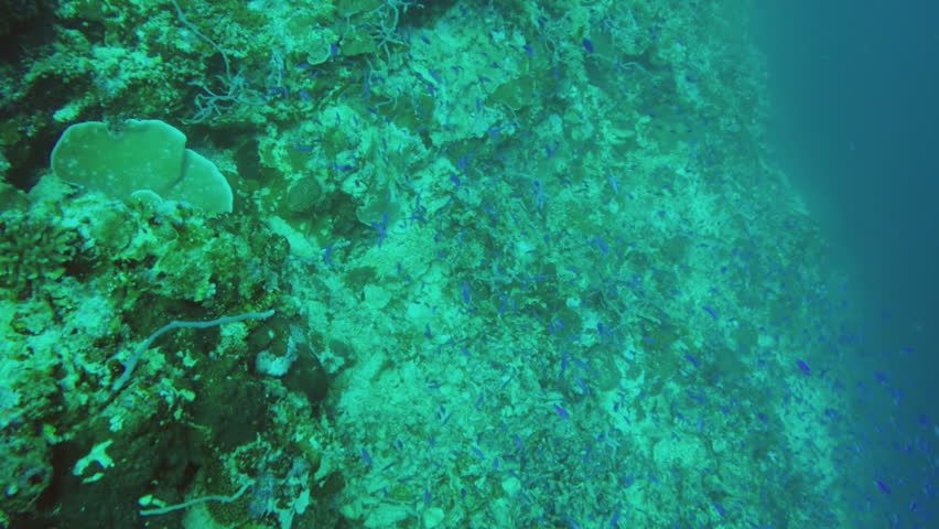 Coral reef and tropical Fish. #13899998
