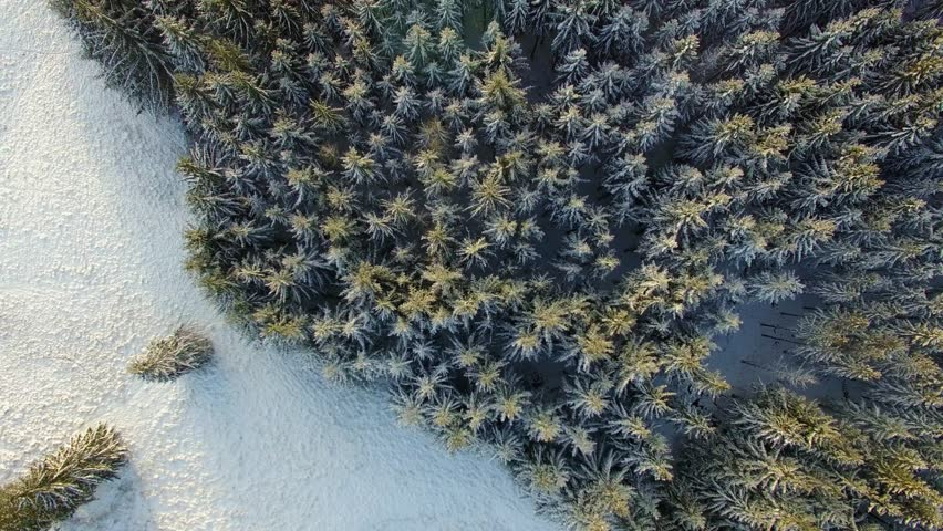 Aerial 4K - Ultra HD: Birds eye view on beautiful silent forrest landscape in snow winter with sun light and awesome lens flares.
