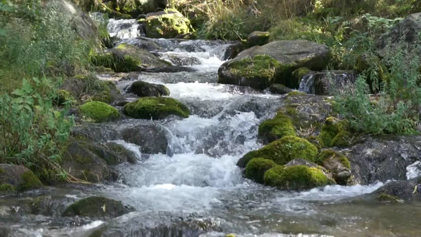 Forest stream running over mossy rocks