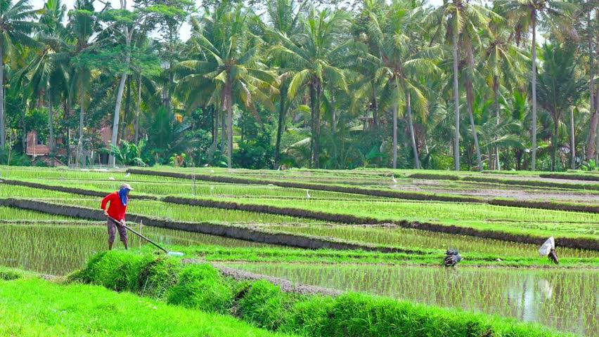 Header of Agricultural Laborer