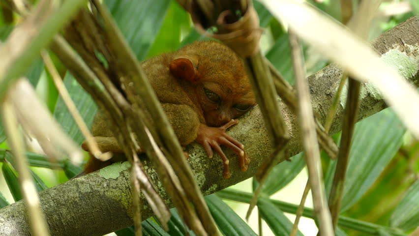philippine wildlife Philippine wildlife news / pctar, manila, philippines 2,234 likes 547 talking about this news about philippine wildlife and environment.