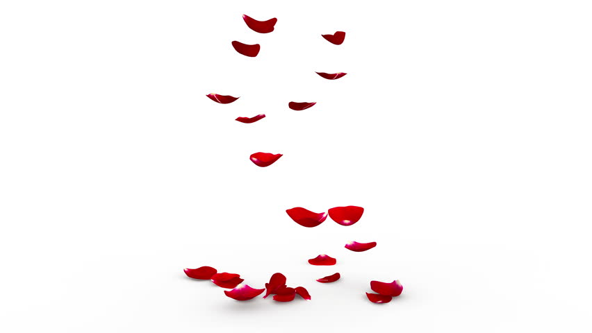 The bright red petals of roses falling down on white floor. Alpha mask included. Quality 4K video | Shutterstock HD Video #14447758