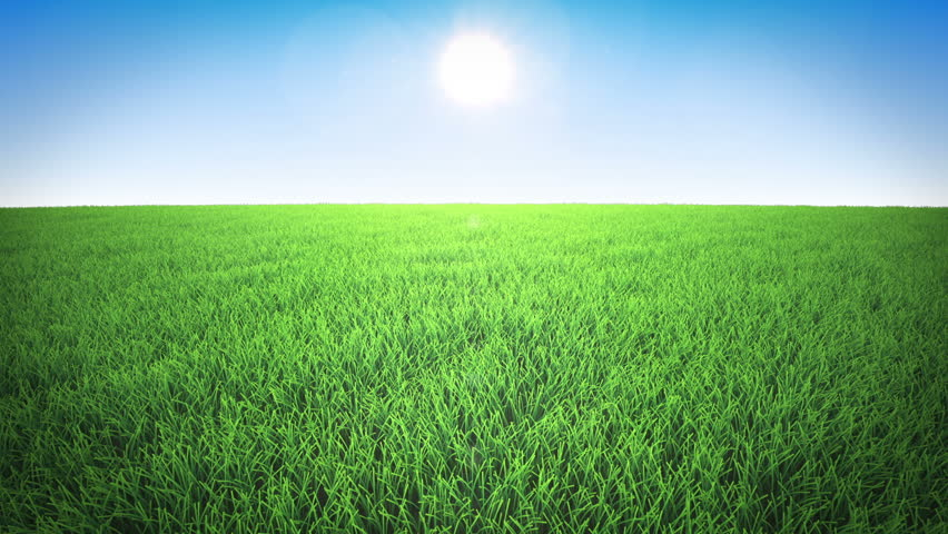 grass field background. Flight Over Grass Field, Daylight, Daytime - HD Stock Video Clip Field Background S