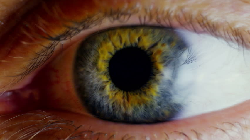 Human eye iris contracting. Extreme close up.  #14563318