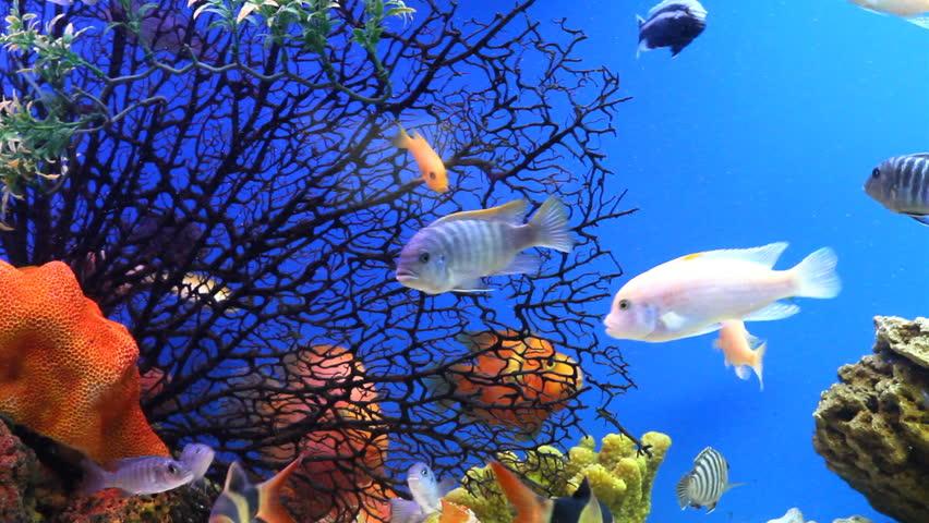 Aquarium fish | Shutterstock HD Video #1459318