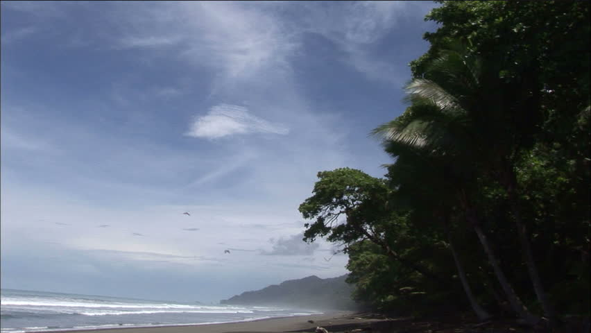 Idyllic Costa Rican Beach With Waves and Scarlet Macaws In Flight