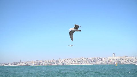 Istanbul maiden tower with seagulls slow motion