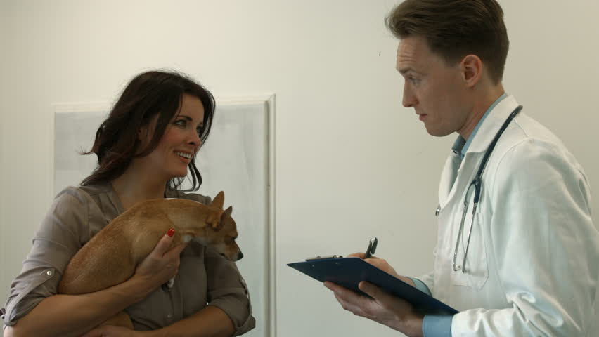 Dog owner speaking with the vet in high quality format | Shutterstock HD Video #14893408
