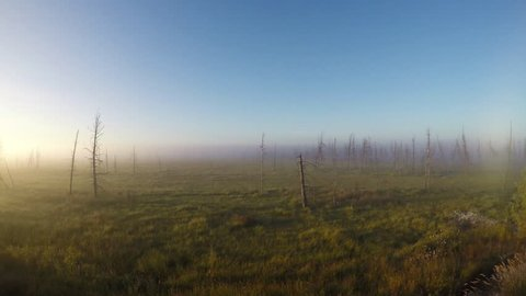 time-lapse of disappearance of fog in taiga, the Yamal Peninsula