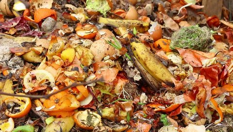 Kitchen Scraps: peels of potato, onion, lemon, tangerine, banana, kiwi, egg. Food waste for biodegraded by composting , and reused to fertilize soil. Compost pile