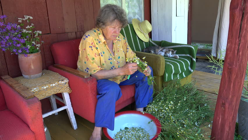 Old herbalist grandmother woman pick camomile flower blooms for herbal medicine and tabby cat sleep on outdoor armchair. Static shot. #14999338