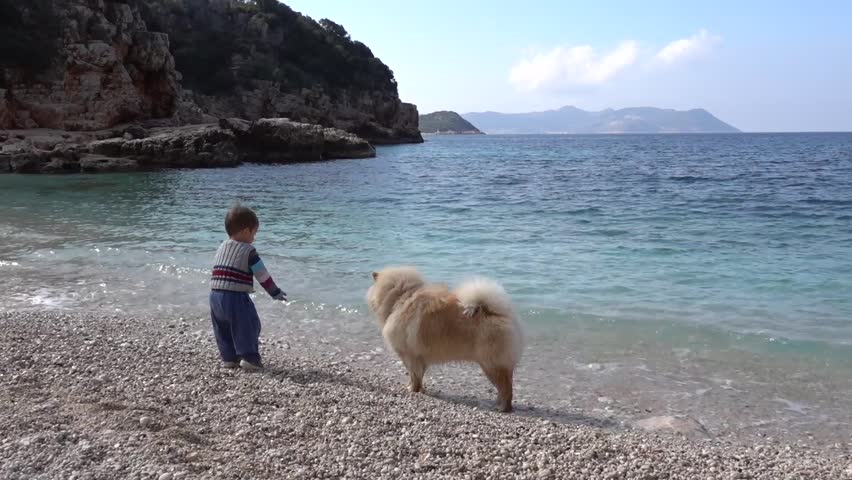Toddler plays with a chow dog at the seaside