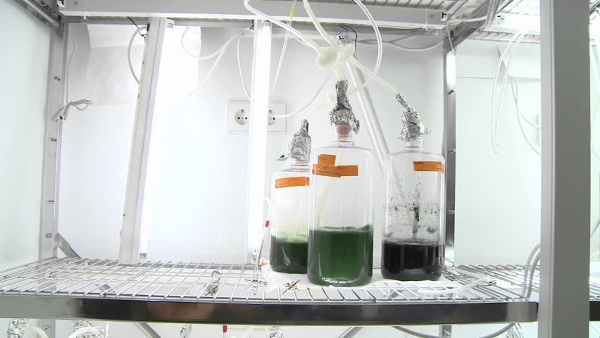 Algae flasks. Dolly movement from a photo-bioreactor we see different sorts of cultures of algae being aired with carbon dioxide.