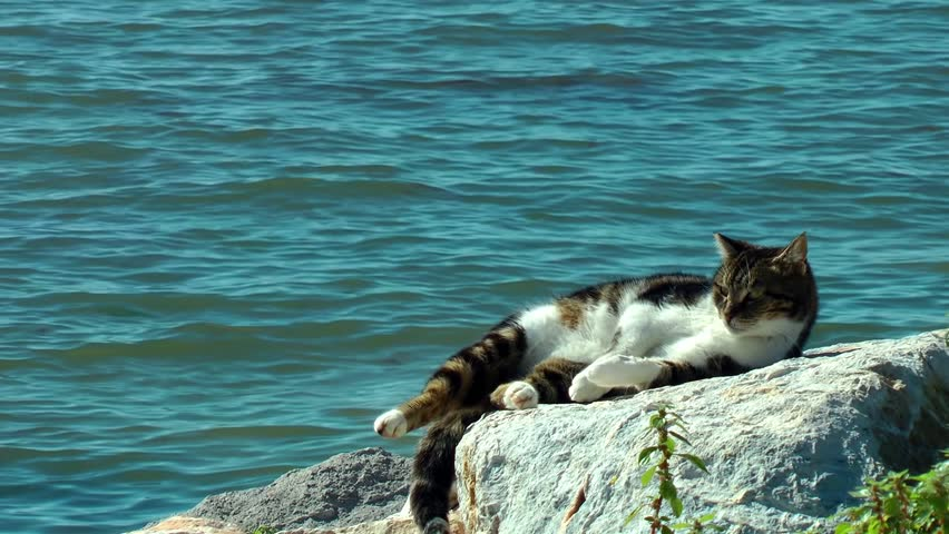 Cat having sunbath at seaside | Shutterstock HD Video #15028258