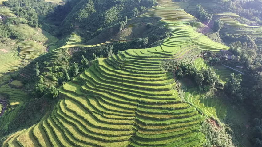 Aerial video in an amazing landscape, with drone, above rice terraces in a beautiful day.   Shutterstock HD Video #15050011