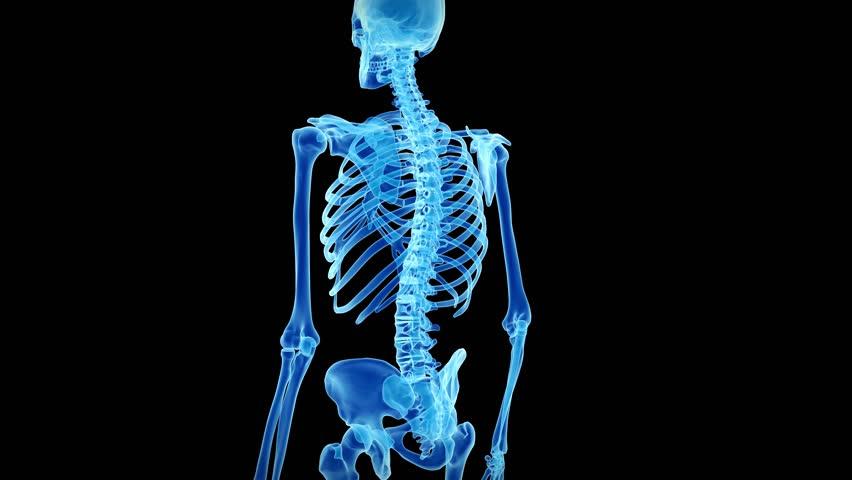 medical 3d animation of the human skeleton stock footage video, Skeleton