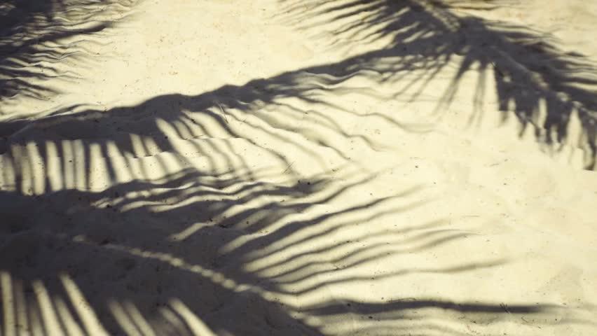 Palm tree shadow on tropical beach  | Shutterstock HD Video #15101188