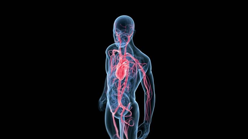 """Résultat de recherche d'images pour """"human body 3d"""""""