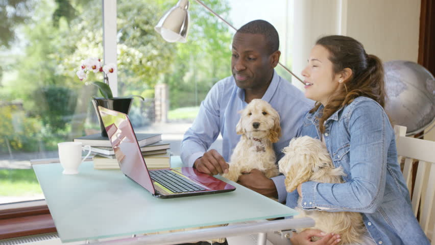 4K Couple working on laptop computer at home with 2 cute puppies