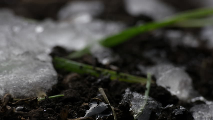 Melting Snow / Melting Ice / Spring Water / Spring Time. Macro time-lapse shot of shiny melting snow particles turning into liquid water and unveiling green grass and leaves. (av26863c)