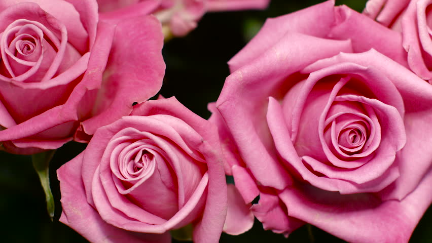 Stock Video Of Big Bouquet Of Pink Roses Pink 15291058