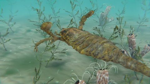 An animation of the large extinct Eurypterus exploring the sea floor. Eurypterids (Sea Scorpions) were giant arthropods existing from the mid Ordovician to late Permian (460 to 248 million years ago)