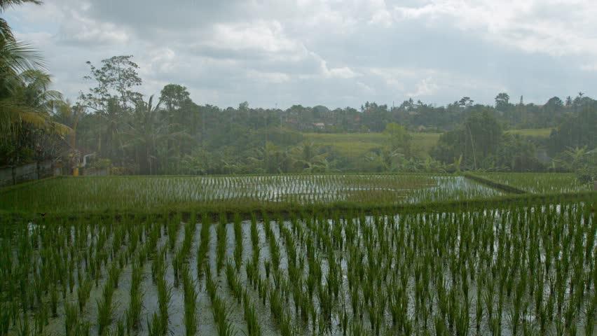 Rain Fields