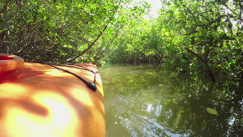 FPV CLOSE UP: Kayaking through dense mangrove forest in calm river canal in sunny summer | Shutterstock HD Video #15482509