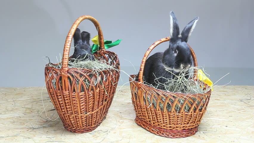 Easter bunny in an easter basket stock footage video 2191561 lovely black rabbits play near the easter baskets and eat hay hd stock footage clip negle Gallery