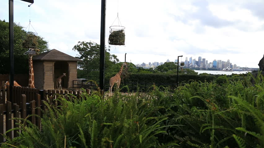 sydney february 28 2016 taronga zoo zoo in the australian city of - Medium House 2016