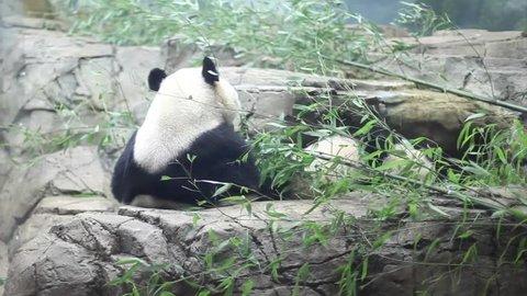 Austria, Vienna, April 2018: Zoo, Stock Footage Video (100