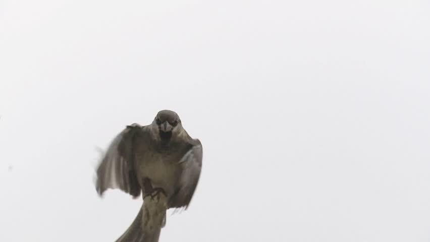 sparrow #1567618