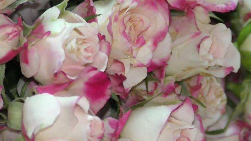 Florist Putting Together An Arrangement Of Roses Flowers Hd Stock Video Clip