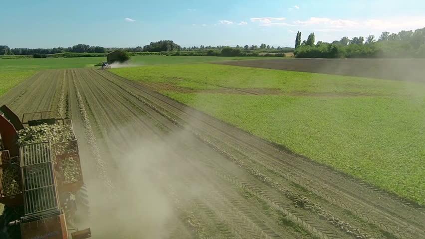 Harvester machine harvesting sugar beet field aerial view | Shutterstock HD Video #16004878