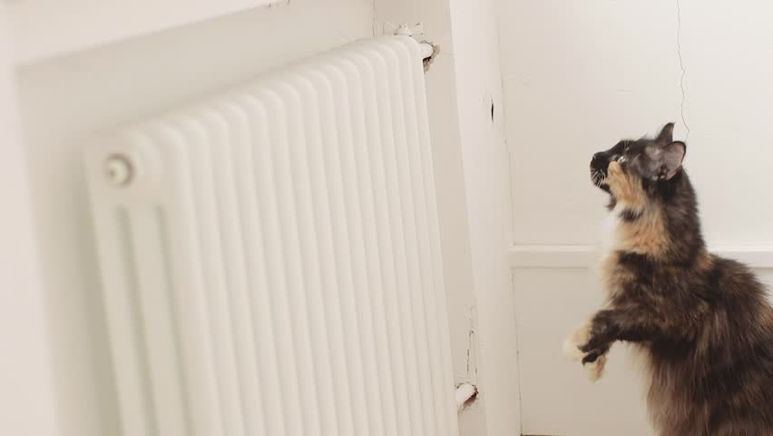 Maine Coon cat jumps on the window | Shutterstock HD Video #16045948