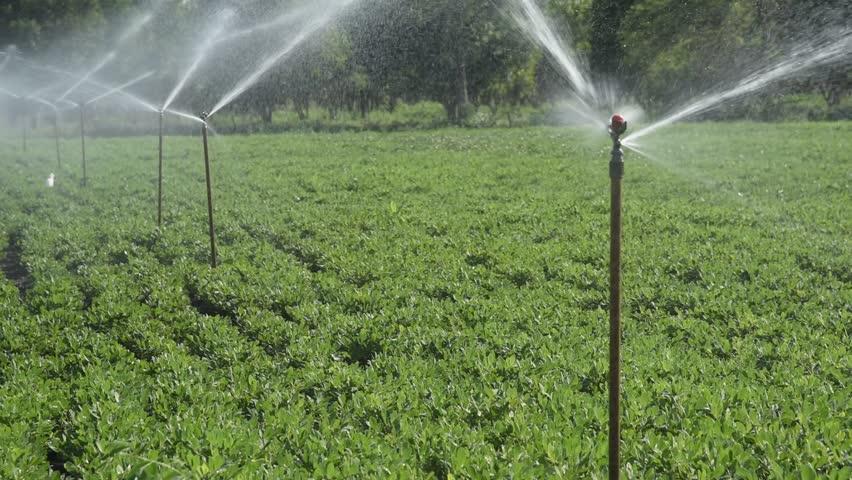 Sprinkler Irrigation for Crop Stock Footage Video (100%