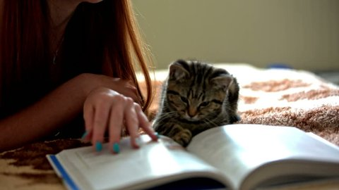 Kitten playing with person while reading book. Cute little baby cat lying next to female person reading book and attacking finger, playing with pages after flipping.