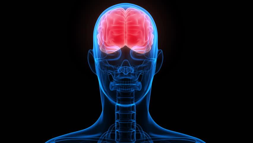 Human Brain Anatomy 3d Stock Footage Video 100 Royalty Free
