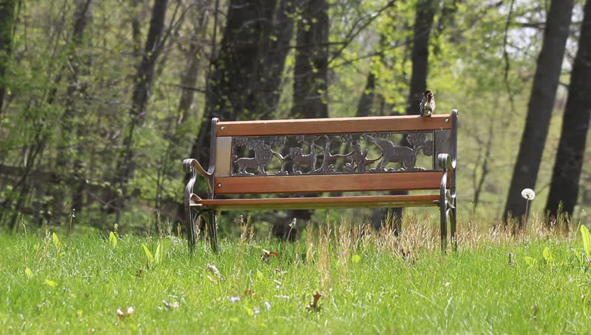 Ordinary Video Bench Part - 6: A Childrenu0027s Park Bench With Dandelion In The Spring Season. - HD Stock  Footage Clip