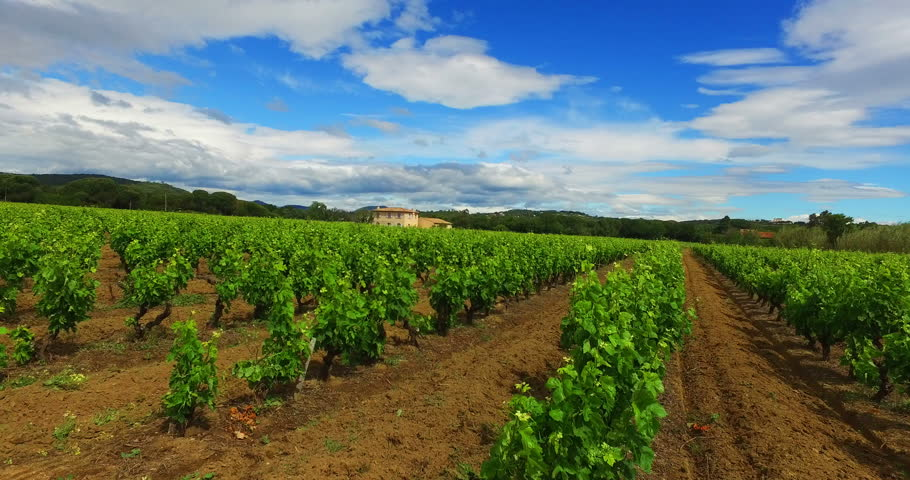 2016 High Quality Stabilized Video (Ultra HD) of a vineyard with a typical french house. Location: French Riviera, St. Tropez. Shot with a rigged 4K Cam. Left side stabilized movement.