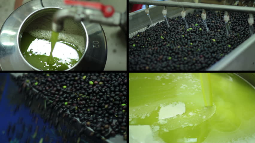 Oil mill - olive oil production- Machine washing the olives