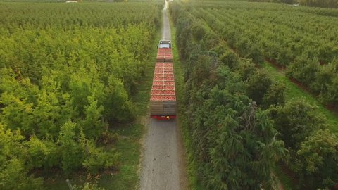 An aerial following view of a truck loaded up with freshly picked apples as they move from the orchard to a packhouse.