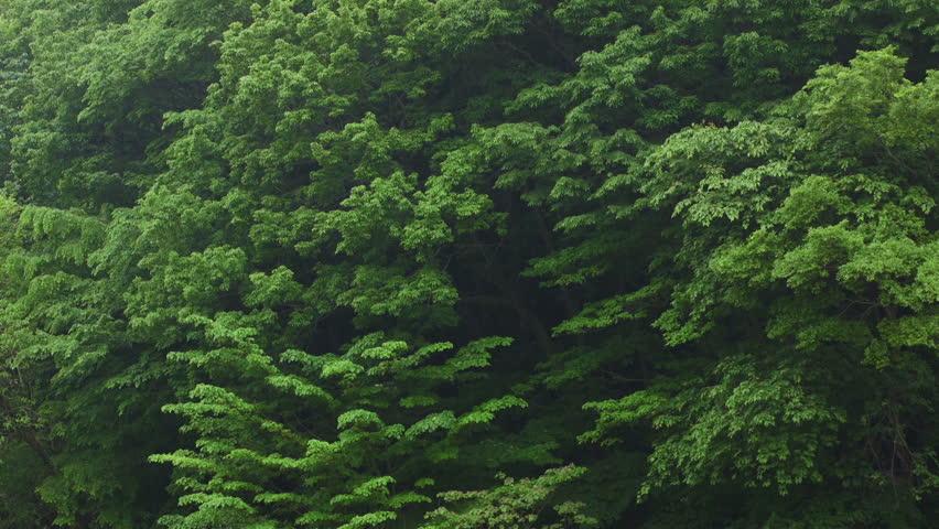 Rainfall, Forest Background   Shutterstock HD Video #16813108