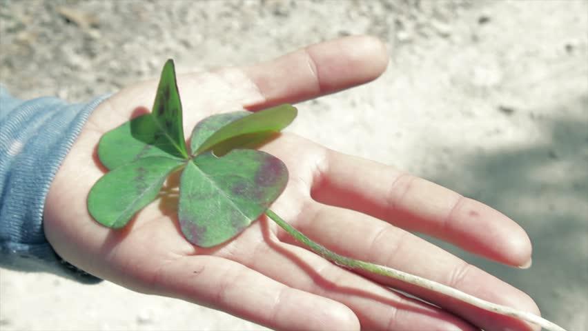 hand holding flower of luck #1689895
