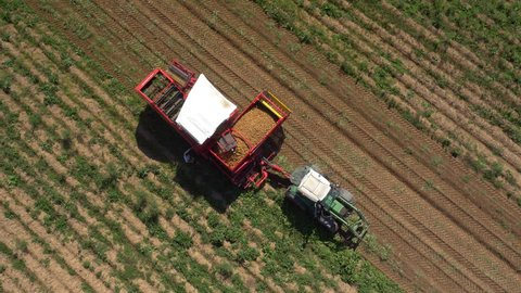 Aerial - Production of potatoes in the field