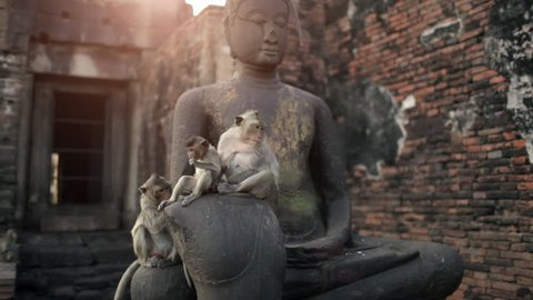 Lopburi city in Thailand, thousands of macaque monkeys live in freedom. In the temple Phra Prang Sam Yod, a monkey family sits on an ancient statue of Buddha.