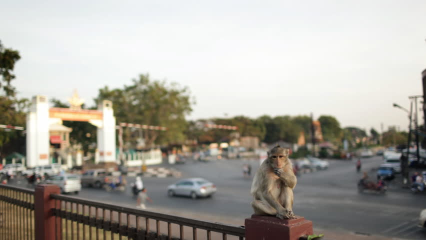 Lopburi city in Thailand, thousands of macaque monkeys live in freedom. A monkey sitting at the entrance of the temple Phra Prang Sam Yod, observes the street